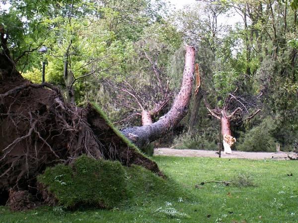 Fotos de Tormenta en Parque de Herencia