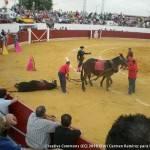 Resumen de la corrida de Toros en Herencia 5