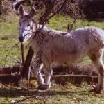 1 el burro se esconde 150x150 - Resolución del VIII Concurso de Fotografía de San Antón