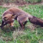 2 cazador cazado 150x150 - Resolución del VIII Concurso de Fotografía de San Antón