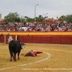 toros en herencia net 0047 150x150 - Herencia, Hoy, Ayer y Siempre Taurina