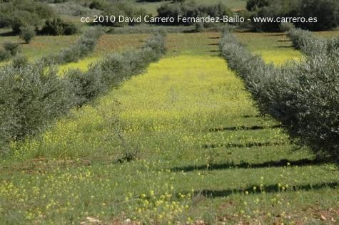 Campo de flores amarillas