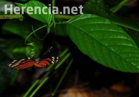 3 concurso fotos san anton luis garcia morato 465x324 - Fallo del X Concurso de fotografía de San Antón