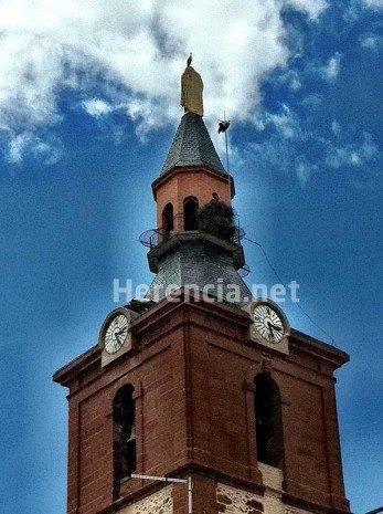 Cigüeña enganchada en pararayos de iglesia en Herencia (Ciudad Real)
