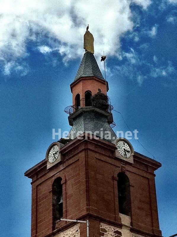 ciguena enganchada pararayos iglesia 1 - Comunicado de la parroquia Inmaculada Concepción sobre la reapertura del templo y culto público