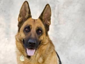 perra sara extraviada en Herencia