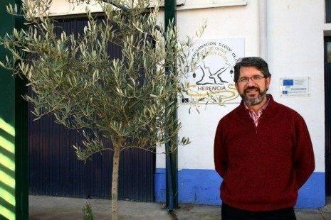 cooperativa encarnacion presidente b 465x310 - 6 millones de kilos de aceituna serán recogidos en Herencia