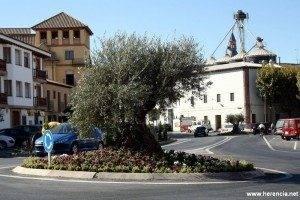 herencia olivo recogida agricultura