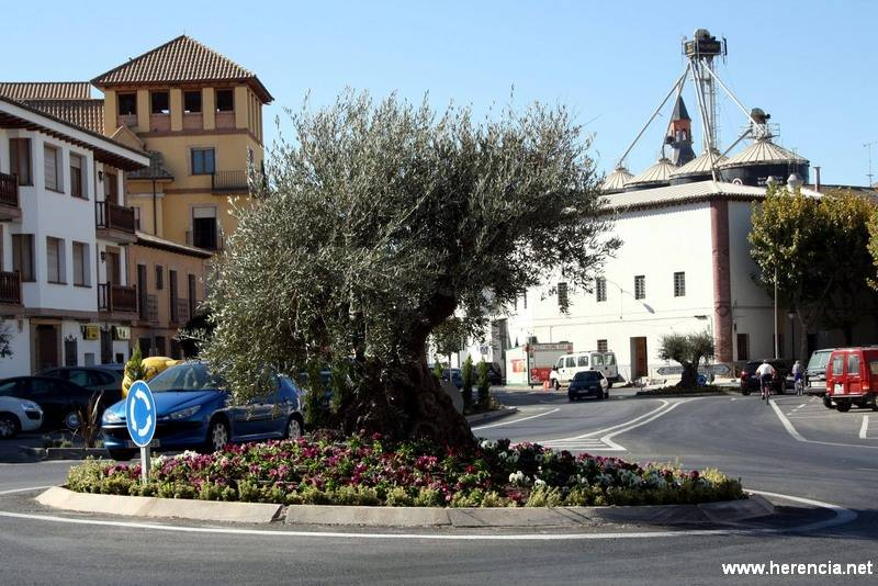 herencia olivo recogida agricultura - En diciembre descendió el paro en Herencia gracias a la agricultura