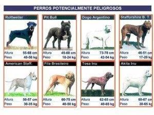 perros peligrosos 300x225 - Crecaión de un Registro de Animales de Compañía en Herencia