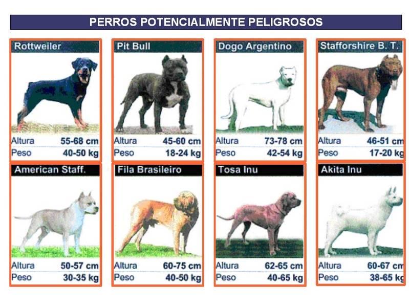 perros peligrosos - Crecaión de un Registro de Animales de Compañía en Herencia