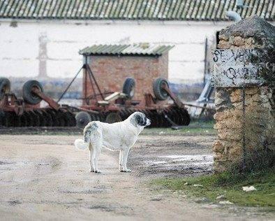 Imagen de la vivienda del pastor. Carlos Sendarrubias. - Continúa el juicio a los detenidos por el asesinato del pastor de Herencia