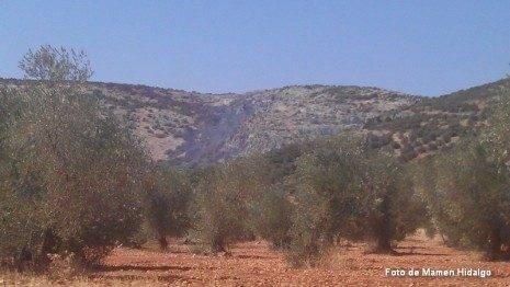 Zona afectada por el fuego en la sierra de Herencia