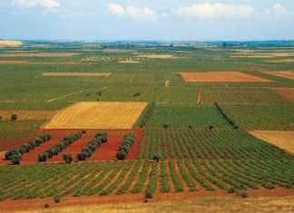 Viñedo de La Mancha. Foto extraída de galandemembrilla.blogspot.com.es