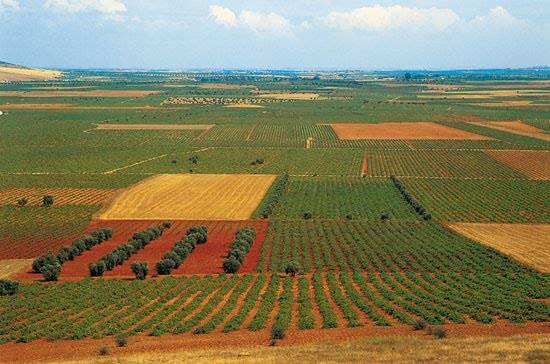 LA MANCHA 3 - La filoxera ataca la mayor región vitivinícola del mundo