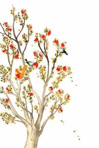fallacoplada. Raquel Aparicio 202x300 - Hoy florecen los libros en Herencia