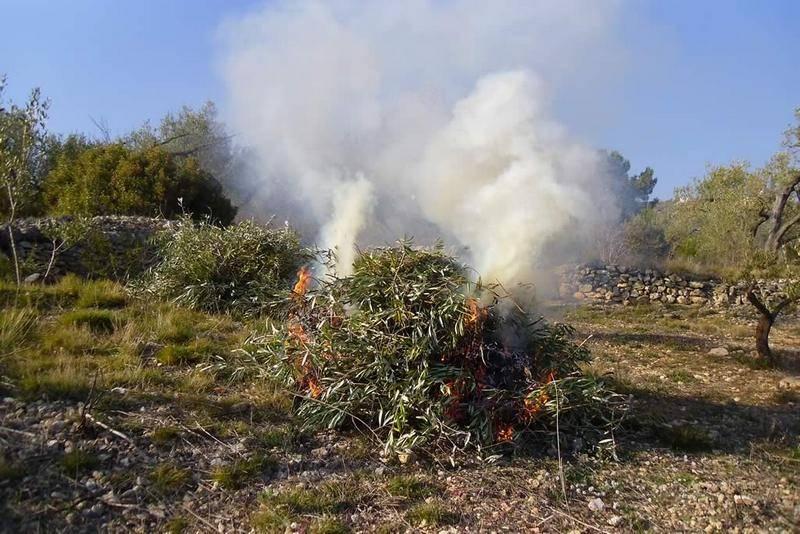 Resolución por la que se prohíbe temporalmente la quema de restos vegetales en el medio natural en las provincias de Toledo y Ciudad Real 1