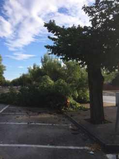 arboles caidos en herencia ciudad real 1 246x328 - Herencia de las más afectadas por las tormetas