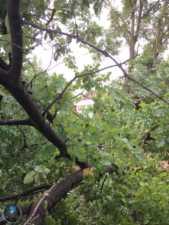 arboles caidos en herencia ciudad real 2 169x225 - Herencia de las más afectadas por las tormetas