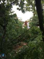 arboles caidos en herencia ciudad real 4 169x225 - Herencia de las más afectadas por las tormetas