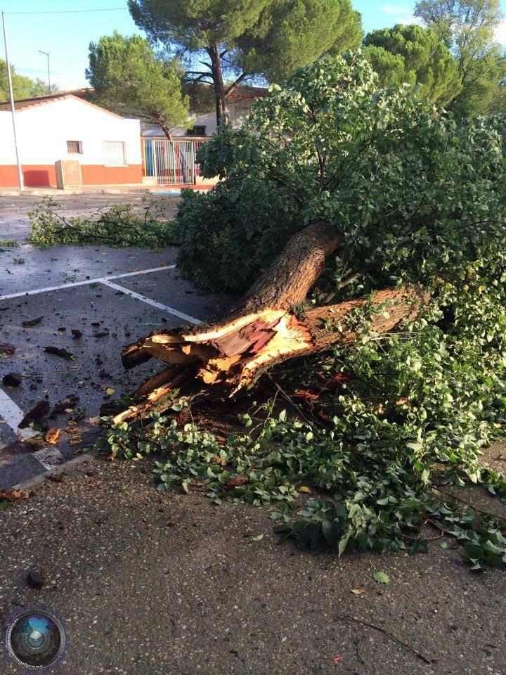 arboles caidos en herencia ciudad real 6 - Herencia de las más afectadas por las tormetas