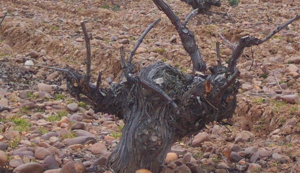 Curso de poda del viñedo 2014 1