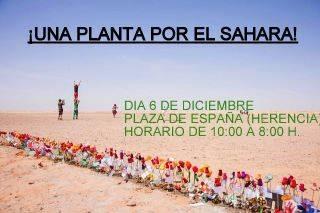Una planta por el Sahara-Herencia