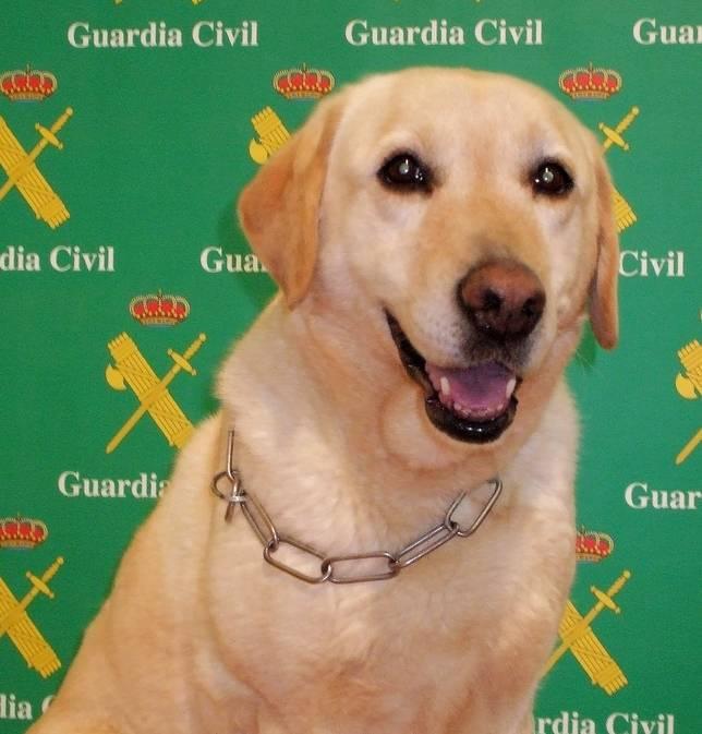 La perra Kenya - Un detenido con 20 paquetes de hachís a su paso por el término de Herencia
