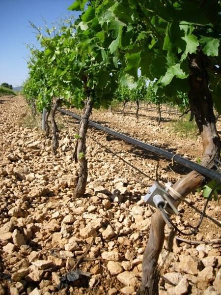 DSCI0918 - WWF colabora con la Comunidad de Regantes de Herencia para instalar su tecnología OptiWine en uno de los mayores viñedos de La Mancha