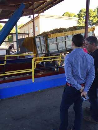 vendimia en herencia y cooperativa visita alcalde 315x420 - La vendimia 2015 en Herencia a pleno rendimiento