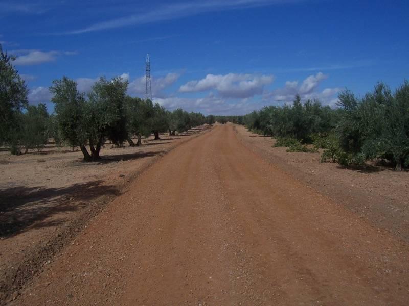 ARREGLO CAMINOS Camino de la juncada Herencia1 - Mejora de caminos en el término de Herencia