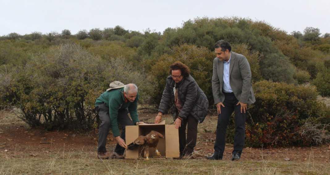 """Liberadas dos águilas imperiales curadas en """"El Chaparrillo"""" 1"""
