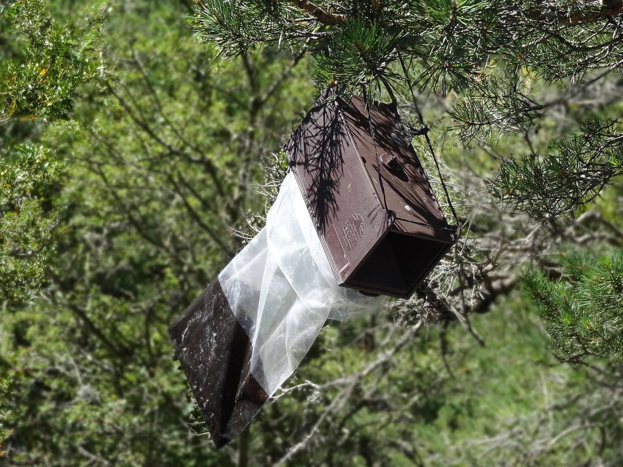 Trampa con la feromona sintética para procesionaria del pino, Navarra. Wikipedia