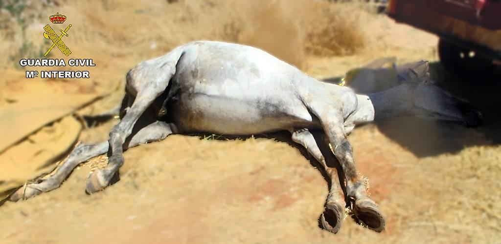 Detenidas dos personas en Alcázar de San Juan por un delito de maltrato animal y contra la fauna 1