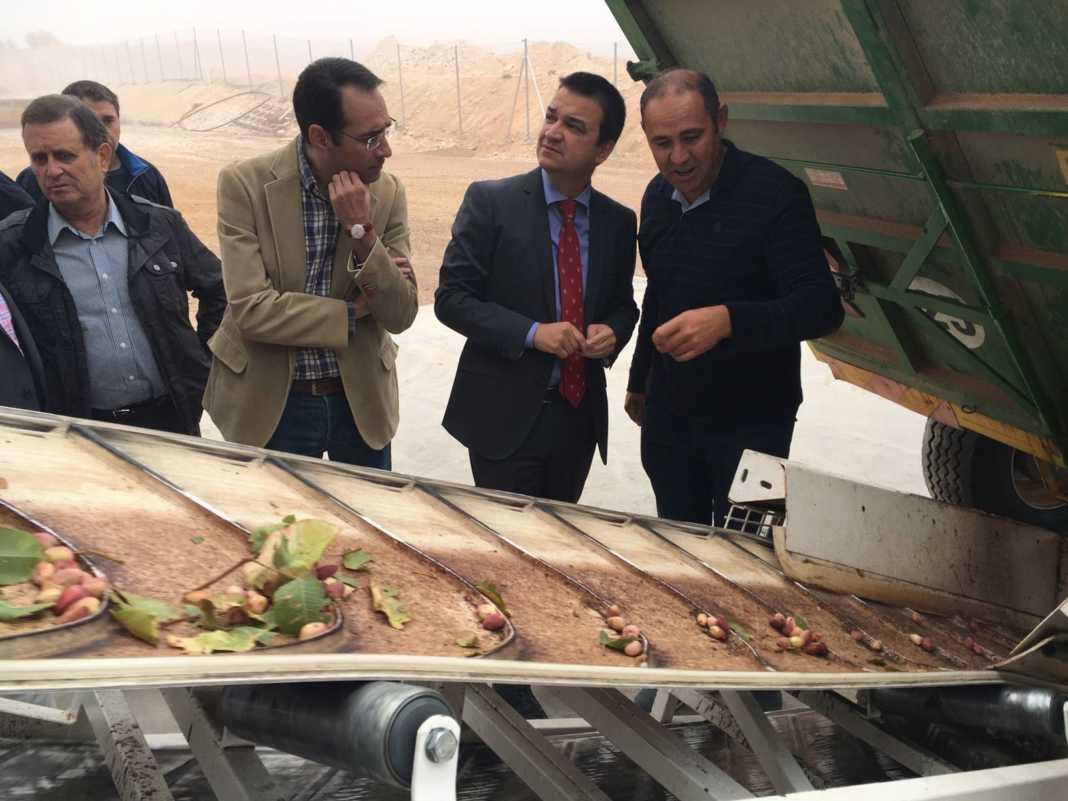 La Mancha quiere ser una referencia del pistacho a nivel europeo 1