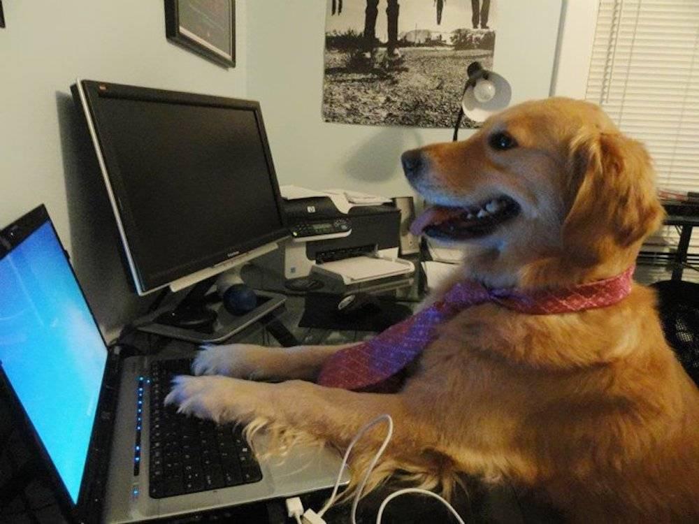 perro con ordenador - Los 10 aparatos eléctricos que consumen más energía apagados