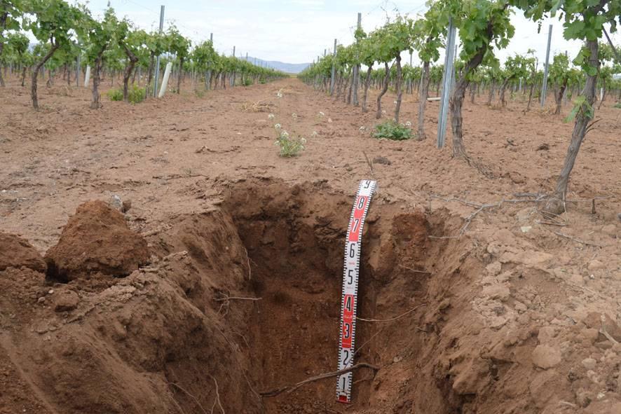 suelo abierto para descripcion edafologica - La empresa herenciana Carbrimo implicada en investigación de abono orgánico procedente del sarmiento