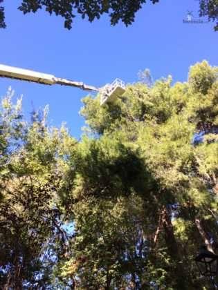 poda de arboles en parque municipal 107 315x420 - Campaña de poda y saneado del arbolado del parque municipal