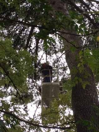 poda de arboles en parque municipal 11 315x420 - Campaña de poda y saneado del arbolado del parque municipal
