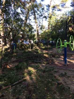 Campaña de poda y saneado del arbolado del parque municipal 21