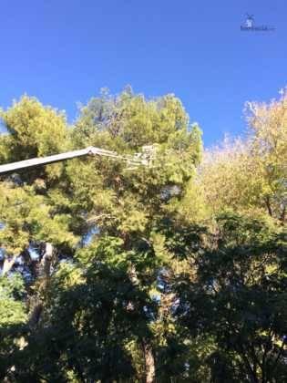 Campaña de poda y saneado del arbolado del parque municipal 26