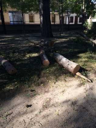Campaña de poda y saneado del arbolado del parque municipal 32
