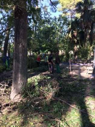 Campaña de poda y saneado del arbolado del parque municipal 34