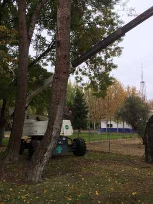 poda de arboles en parque municipal 5 315x420 - Campaña de poda y saneado del arbolado del parque municipal