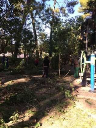 Campaña de poda y saneado del arbolado del parque municipal 36