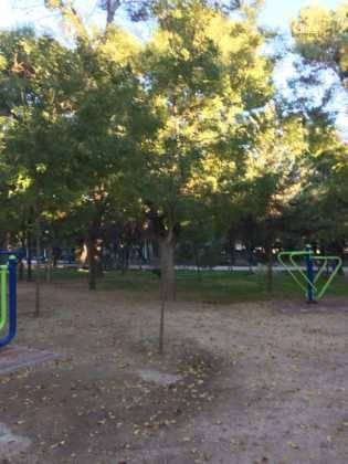 Campaña de poda y saneado del arbolado del parque municipal 54