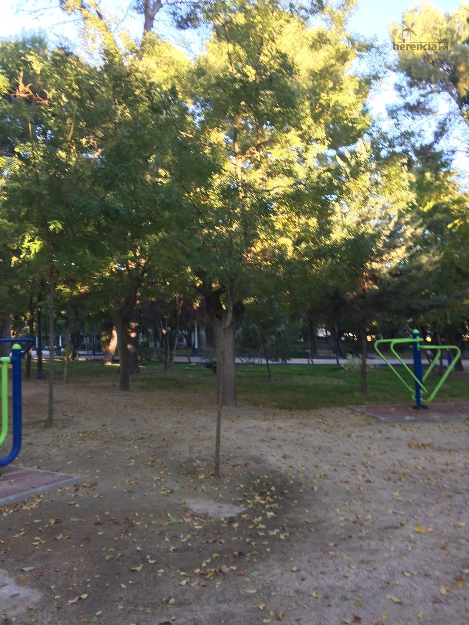 poda de arboles en parque municipal 76 - El parque municipal se cierra debido a los fuertes vientos