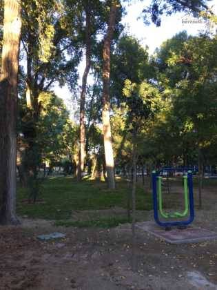 poda de arboles en parque municipal 79 315x420 - Campaña de poda y saneado del arbolado del parque municipal