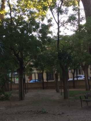 Campaña de poda y saneado del arbolado del parque municipal 56