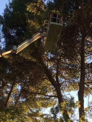 Campaña de poda y saneado del arbolado del parque municipal 57